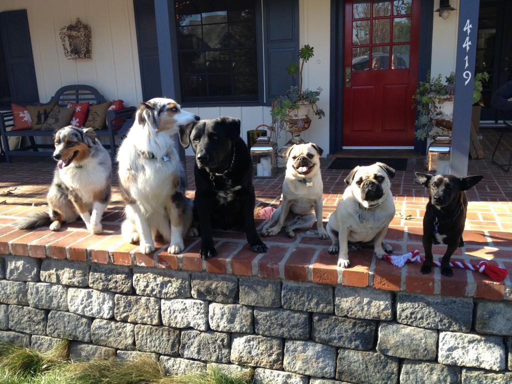 dogsmerryxmasdogs